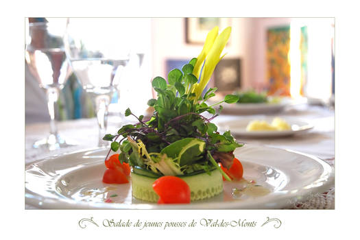 Salade de jeunes pousses