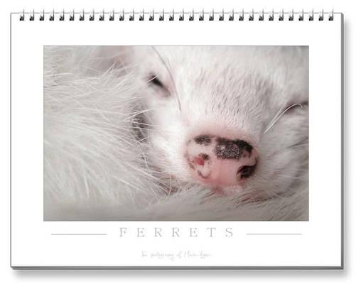 Ferrets Calendar - 2nd edition