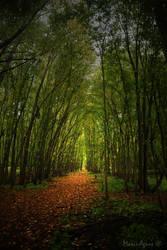 The trail II by Yukkabelle