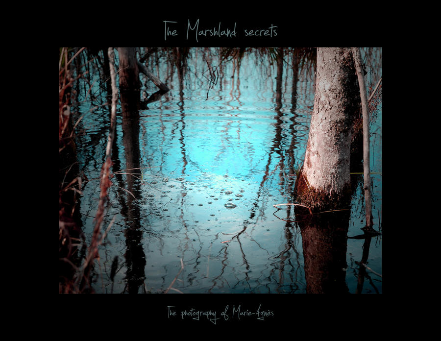 The Marshland Secrets Calendar