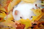 Autumn by Yukkabelle