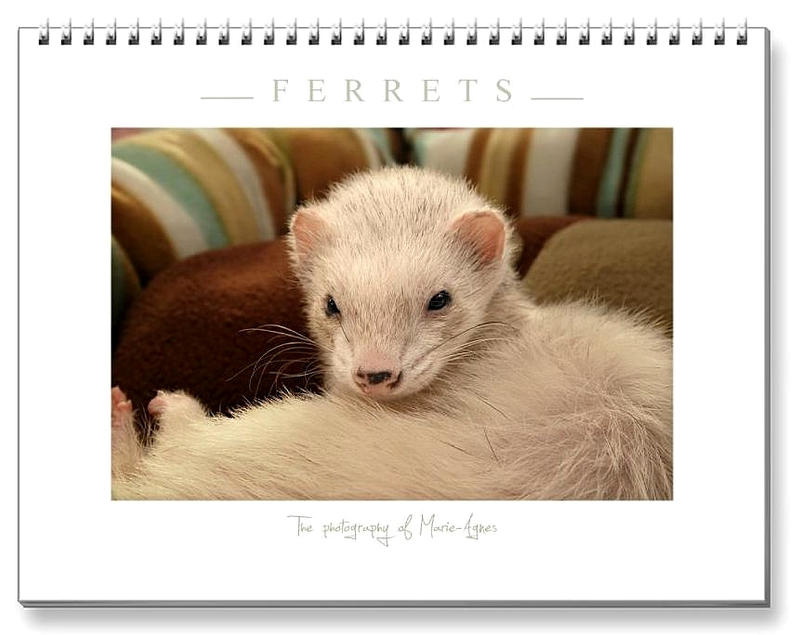 Ferrets Calendar -3 - by Yukkabelle