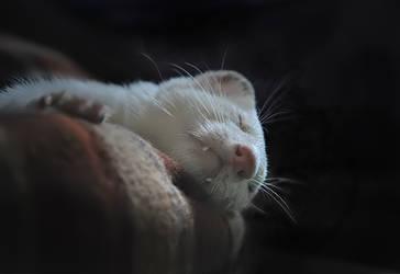 Sonata for a Ferret Dream by Yukkabelle