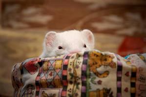 Basket of Fluffy white Love