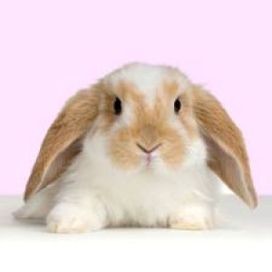 Mulindee's Profile Picture