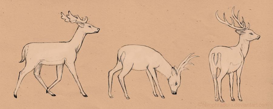 Deer study by Nimphradora