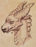 Dragon study I by Nimphradora