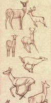 Deer poses study