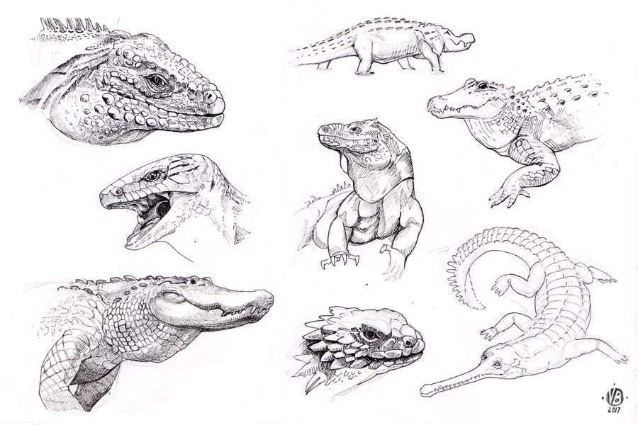 Reptiles study by Nimphradora