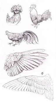 Bird and wing study