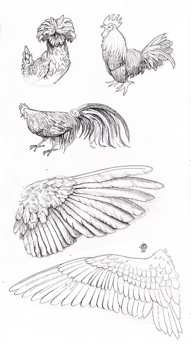 Bird and wing study by Nimphradora