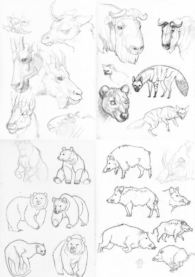 More animal studies by Nimphradora