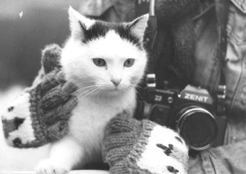 Photo Cat by RadoslawSass