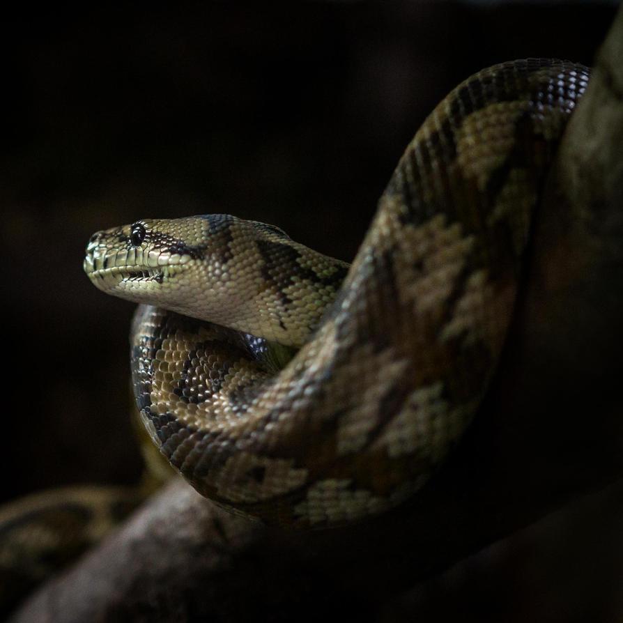 Python by RadoslawSass