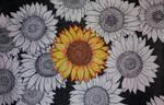 Lula's sunflowers