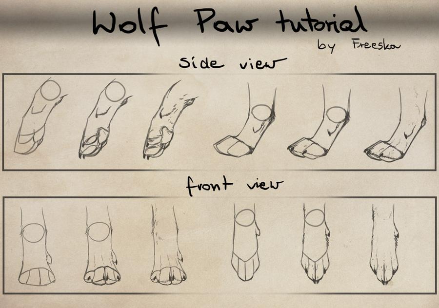 http://fc09.deviantart.net/fs71/i/2012/022/1/c/wolf_paw_tutorial_by_freeska-d4n845q.png