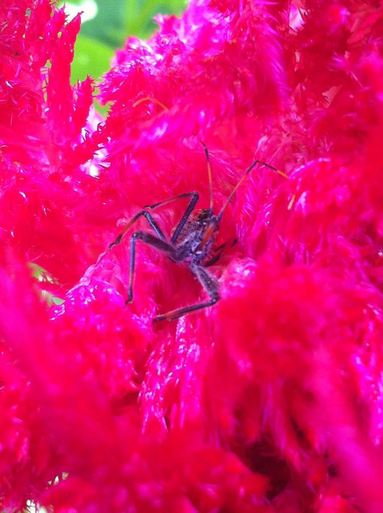 Evil Bug by m-angel05