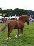 Stallion 3