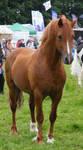 Stallion 7