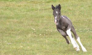 Tiny foal stock 1