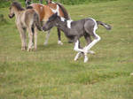 Tiny foal stock 6