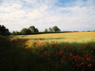 Poppy field 1 by The-strawberry-tree