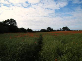 Poppy field 2 by The-strawberry-tree