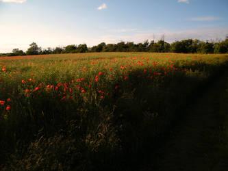 Poppy field 3 by The-strawberry-tree