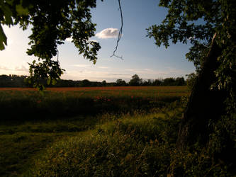 Poppy field 5 by The-strawberry-tree