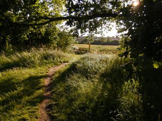 Poppy field 6 by The-strawberry-tree