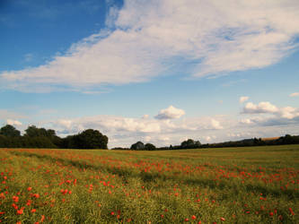 Poppy field 8 by The-strawberry-tree