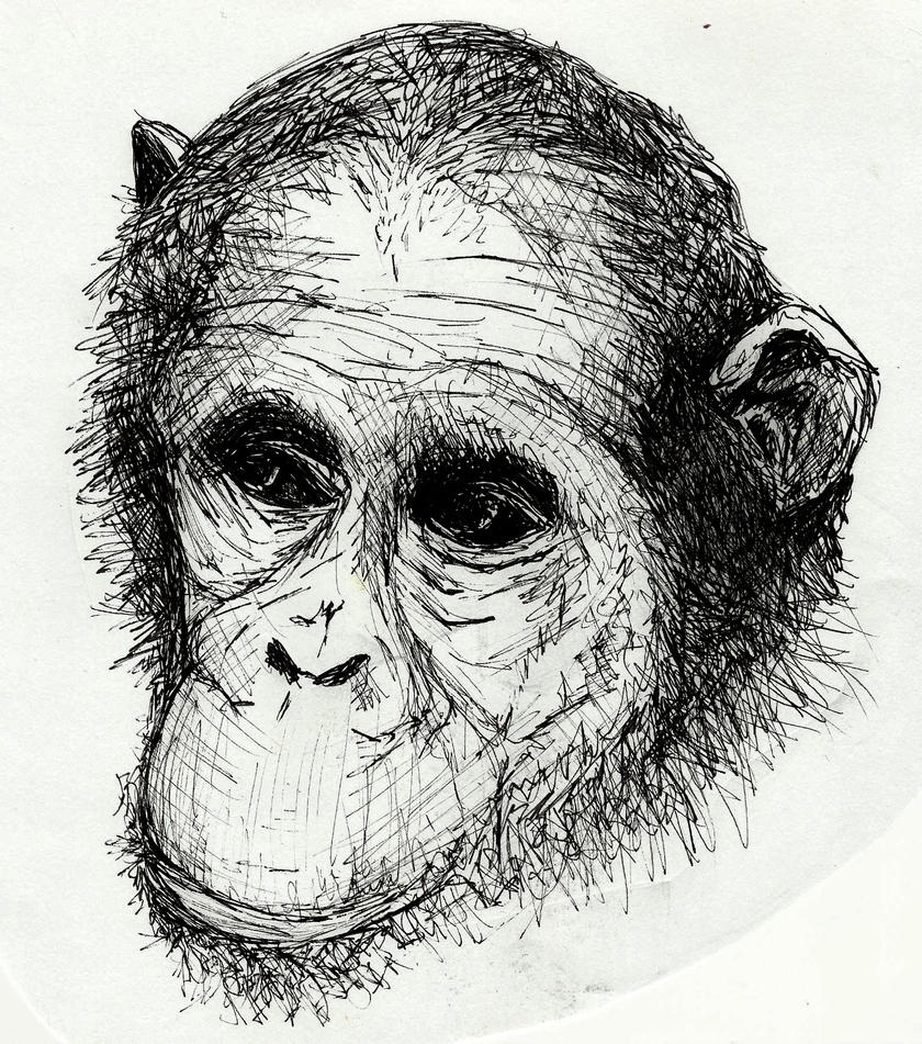 Monkey Face by gembristol on DeviantArt