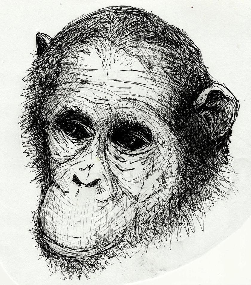 Monkey Face by gembristol on DeviantArt