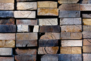 The Wasp and the Wood Pile by SteveR55