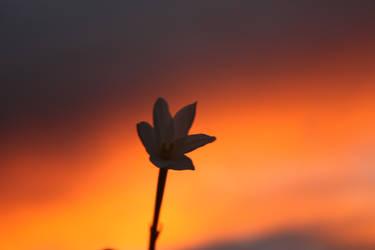 The sun will rise again by Rainstar17