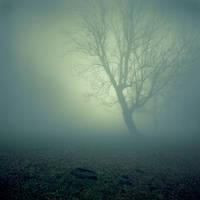 Hasla-has by fogke
