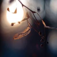 Half past solitude by fogke