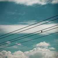 Skybird by fogke