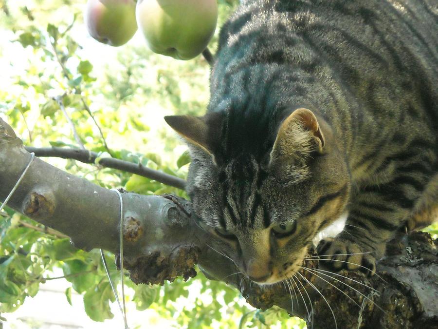 cat in apple tree by roberture on deviantart. Black Bedroom Furniture Sets. Home Design Ideas