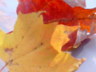 Fall Leaves by Zukira-Phaera