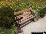 Bench by alp-d