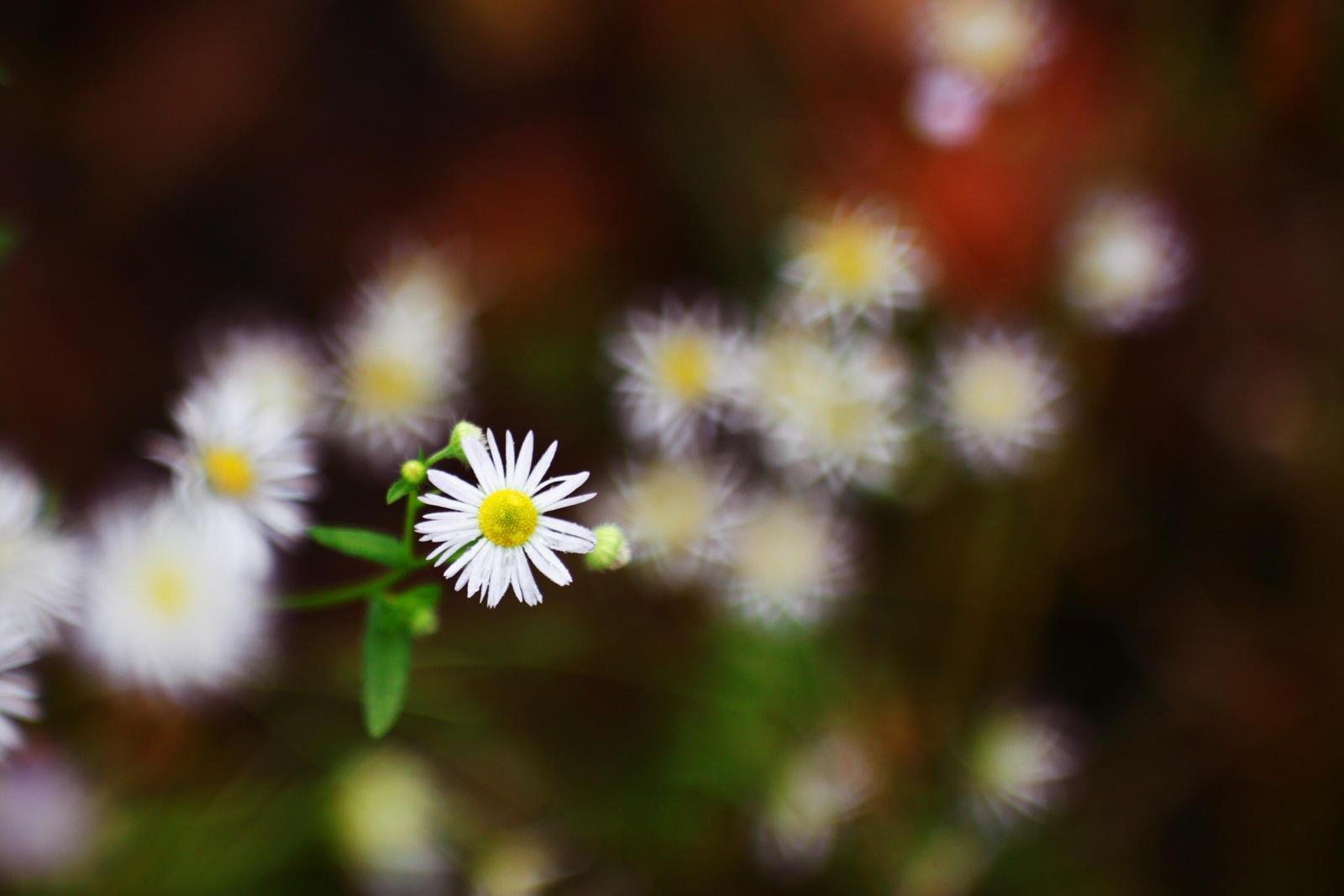 Autumn flower by darkshines7