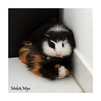 guinea pig totem:Maki and Miyu by Kirika-Ayanami