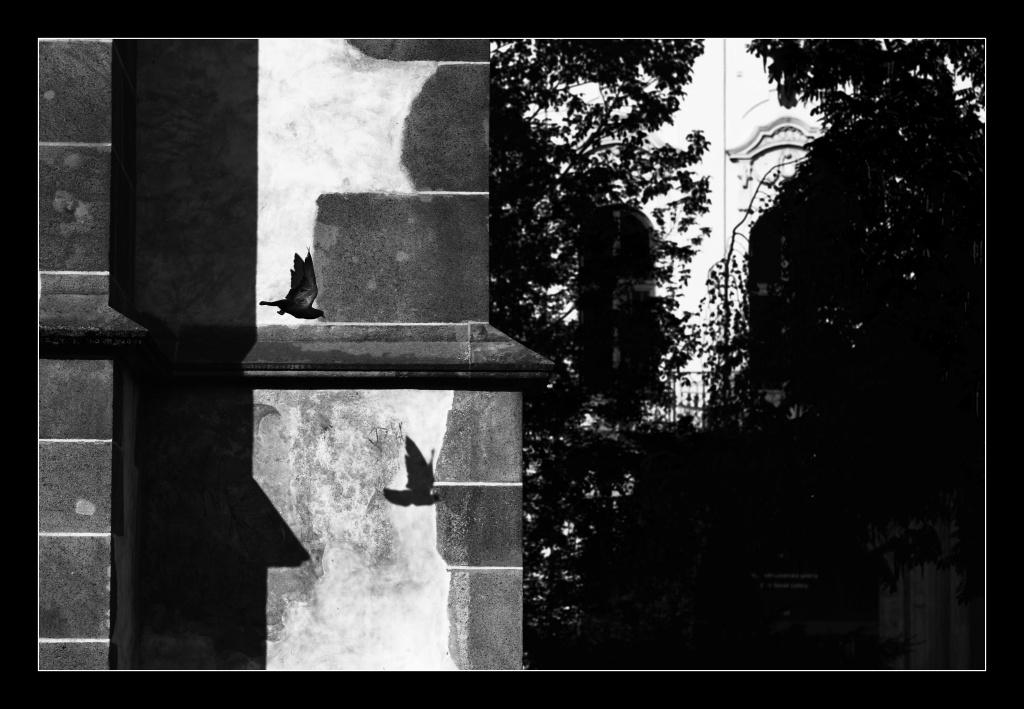 Pigeon years by edgardRobertson