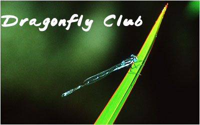Dragonfly ID by Dragonflies-Club