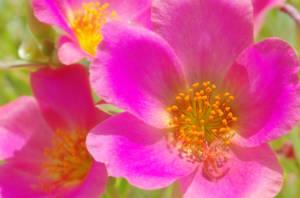 pinky by sapoguapo