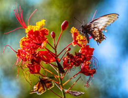 Butterflies4172
