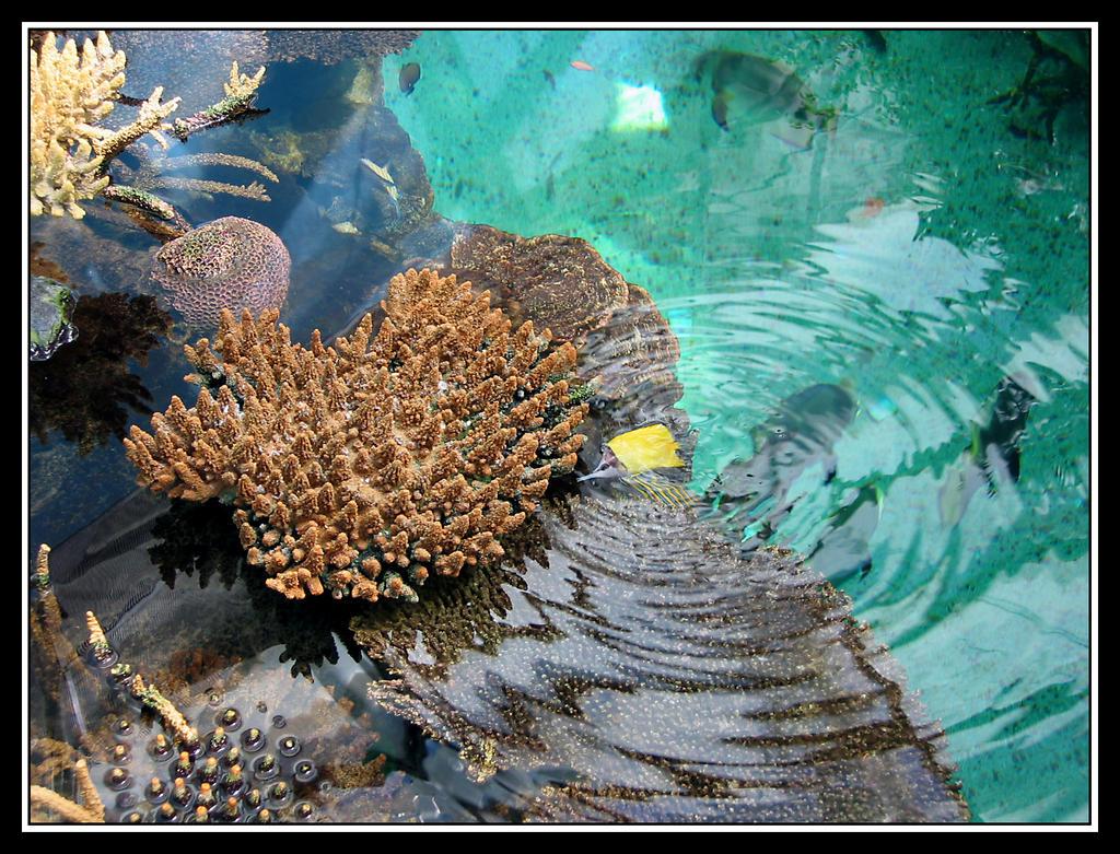 Aquatic Life by jotamyg