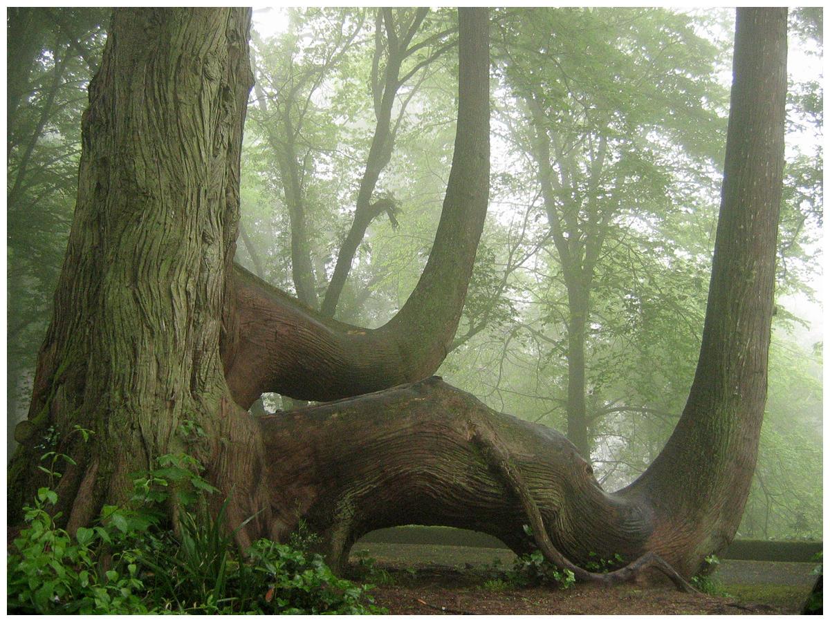A Mist Day by jotamyg