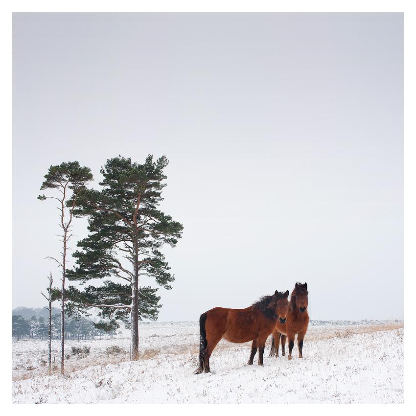 Horses... by AdamMajchrzak